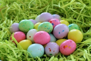 Robins Eggs Nested