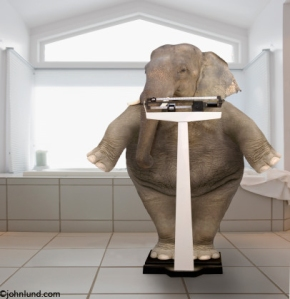 Elephant on Scales